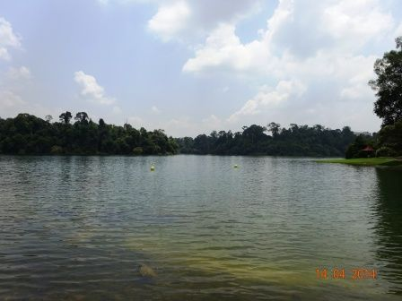 Photos of MacRitchie Reservoir Singapore 5/8 by Prahlad Raj