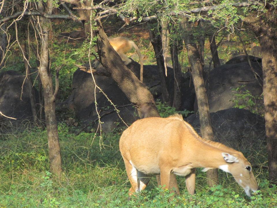 Photos of Ranthambore National Park, Prempura, Rajasthan, India 2/4 by Prahlad Raj