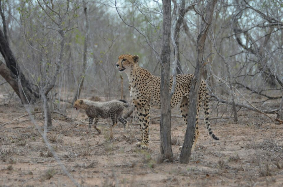 Photos of Awesome  (3rd) day at Kruger Park 1/1 by Jeroen Borst