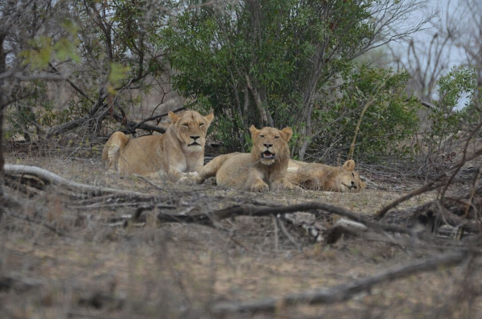 Photos of Short (4th) day at Kruger Park 1/1 by Jeroen Borst