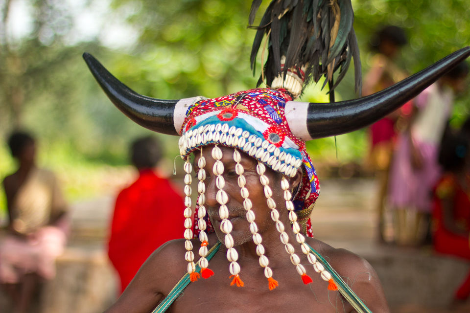 Photos of A Bison Horn Maria man with a head dress 1/1 by Supriya Sehgal
