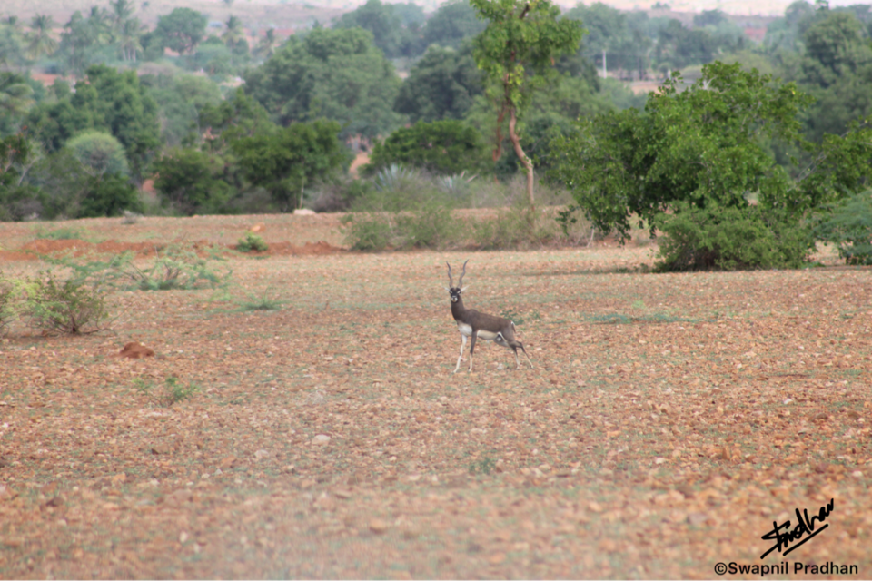 Photos of Lone Male...looking right @ me! 1/1 by Swapnil Pradhan