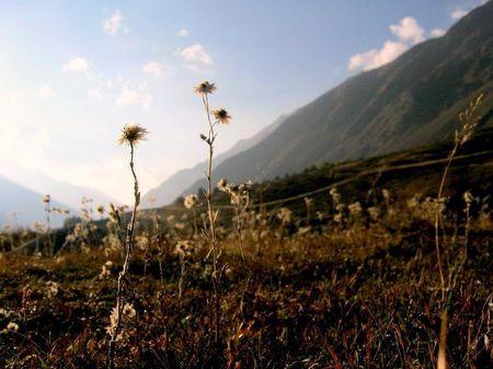 Photo of The End Of The Trek - Kheerganga, Parvati Valley