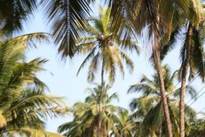 A long weekend in Goa!