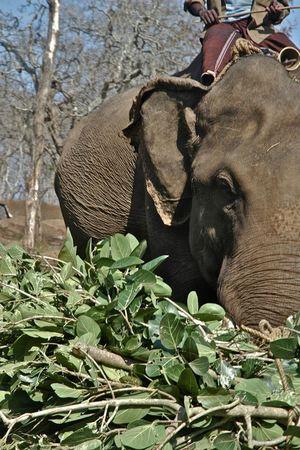 Masinagudi,Jungle Retreat - Forests of South India