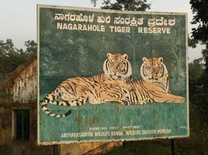 India: Safari - You Don't See Tiger, Tiger Sees You!