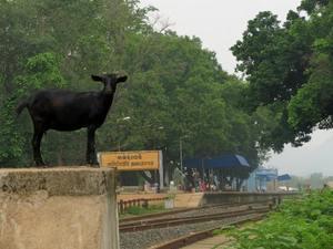 Bangriposhi – A gateway for runaway souls