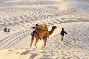JAISALMER - Desert Sand and More!!
