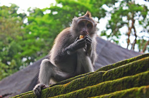 Sacred Monkey Forest Sanctuary 1/15 by Tripoto