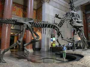 American Museum of Natural History 1/1 by Tripoto