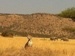 A Wildlife Safari & Luxury Accommodation: Tanzania