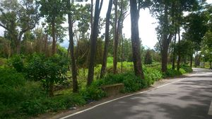 The Emerald Wayanad