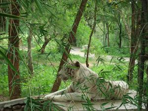 Bannerghatta National Park 1/29 by Tripoto