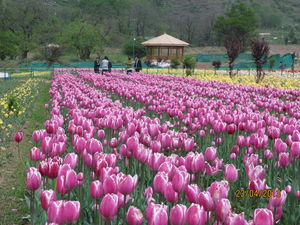 """Jammu and Kashmir - """"Truly paradise in itself"""""""