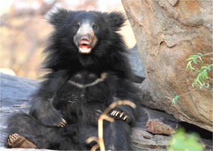 This Sloth Bear Sanctuary In Gujarat Is The Upcoming Destination Animal Lovers Are Crazy About