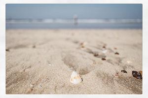 Konkan beach marine life and fun