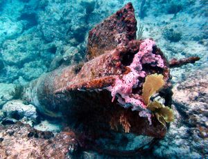 Lia Reef 1/1 by Tripoto
