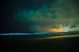 Never Seen Before: Bioluminescense in South Goa!
