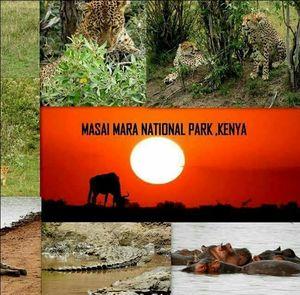 My visit to Masai Mara in Kenya