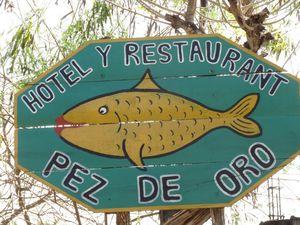 Hotel Pez de Oro 1/1 by Tripoto