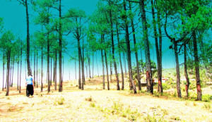 Timber Trail to Binsar