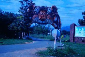 Tiger Temple Thailand!