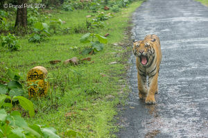 Tadoba : Place of the Big 5