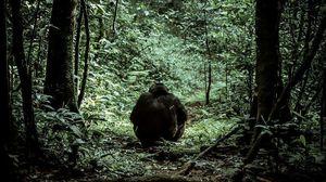 Chimpanzee tracking one fascinating activity in Uganda.