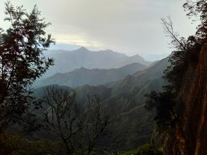 Kodai-The Gift of the Forest