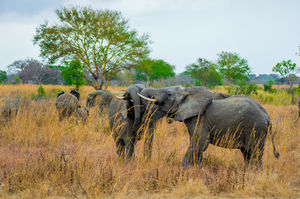 Tanzania - Safaris & Zanzibar in 12 days