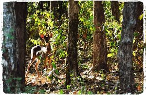 A Traveler's Guide to Dandeli Wildlife Sanctuary
