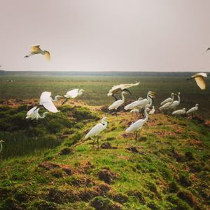 Mangalajodi: Where People Protect Their Birds