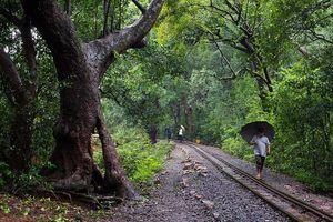 Matheran in Monsoon – A Heaven near Mumbai