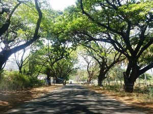 Unplanned Road Trip to Udumalpet and Palani