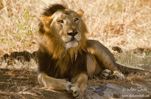 Gir National Park