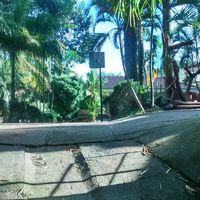 Royal Palm Resort 4/7 by Tripoto
