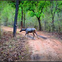 Bandhavgarh National Park 4/10 by Tripoto