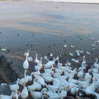 Sukhna Lake 3/41 by Tripoto