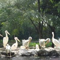 Jurong Bird Park 3/53 by Tripoto