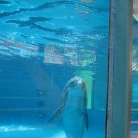 Sea Life Park Hawaii 3/8 by Tripoto