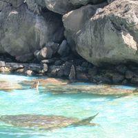 Sea Life Park Hawaii 2/8 by Tripoto